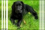 Amos mit 10 Wochen im Oktober 2008